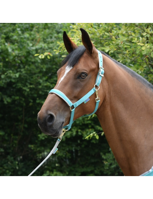 Bucas Halfter Dublin Pony